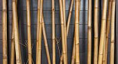 Yellow Bamboo Fence Background On The Black Wood