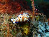 picture of slug  - The surprising underwater world of the Bali basin - JPG
