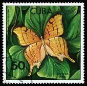Vintage  Postage Stamp. Butterfly Marpesia Eleuchea.
