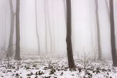 image of mystique  - Forest in the fog and winter environment