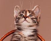 Cute little kitten in a wicker basket on grey background