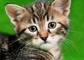 Close up portrait of cute little kitten on green background