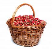 Fragaria Viridis, Wild Strawberry
