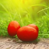 Red Easter Eggs In Green Grass