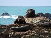 Seals in Kaikoura, New Zealand