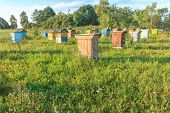 Farm Apiary With Multicolor Beehouses