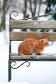 Red cat on bench in park on snowfall background