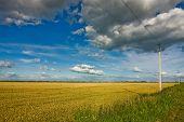Field Of Ripe Wheat