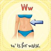 Illustration of a letter W is for waist