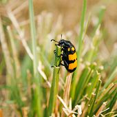 Yellow black grass insect