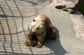 foto of zoo  - Bears in the zoo park - JPG
