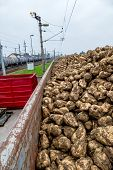 foto of ethanol  - sugar beet and freight train symbol of harvest - JPG