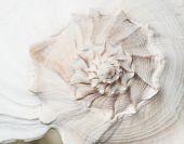 macro shot of seashell