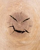 Angry Wood Head