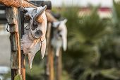 stock photo of cow skeleton  - Cow skuls hanging on beams with deep focus - JPG