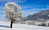 Mountain Landscape In Winter With Snow