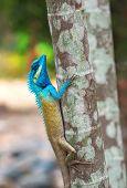 Tropical Lizard On The Tree