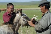 Men work with foal, circa Harhorin, Mongolia.