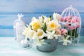 foto of daffodils  - Bright white daffodils and tulips flowers in bucket candles on turquoise painted wooden planks against blue wall - JPG