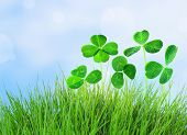 stock photo of clover  - Clover leaves in grass on blue sky background - JPG