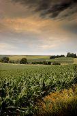 Morning On The Cornbelt