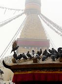 stock photo of pigeon  - The pigeon and stuba of Nepal in background - JPG