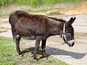 pic of donkey  - bright picture a funny donkey sunny day - JPG