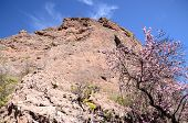 foto of volcanic  - Volcanic Rock Basaltic Formation in Gran Canaria Canary Islands - JPG