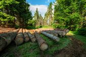 stock photo of coniferous forest  - pine log in coniferous forest - JPG