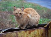 foto of animal cruelty  - Stray Ginger Cat sitting on a garbage can - JPG