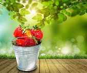 picture of bucket  - Full bucket of a giant Full bucket of a giant strawberry - JPG