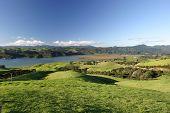 Green Pastureland, Coromandel Peninsular, New Zealand