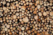 Fundo de Logs de pinho