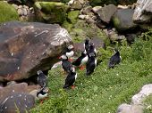 Puffin Meeting Place