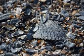 Beach Shell Texture (II)