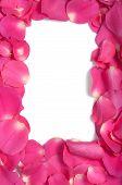 Rose petals as border