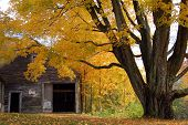 Autumn Foliage With Shed