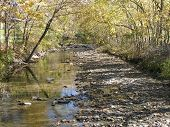 Autumn Fall By The Creek