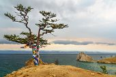 Ritual Tree With Colorful Ribbons Hadak In The Overcast. Lake Baikal. Olkhon Island. Russia poster