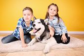 Cute little children with Husky dog at home poster