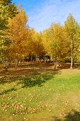 Autumn Scene Vertical