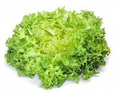 closeup of an escarole endive on a white background