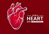 World Heart Day With Gradient Red Human Heart Real And White Outline Drawing Sign On Dark Red Backgr poster