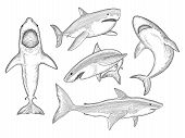 Shark Hand Drawn. Water Creature Flowing Big Monster Fish With Mouth Vector Sketch Collection. Shark poster