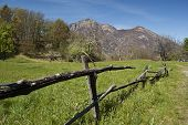 spring meadow with fence