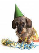Dog With Party Hat And Party Streamers