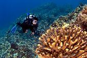 Taucher suchen im Coral in Kona hawaii