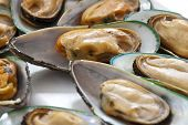 mussel from New Zealand