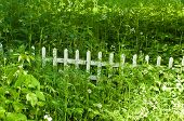 Wooden Fence In The Grass
