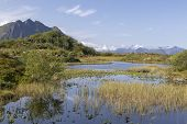 Marsh Land Near Straumnes, Vagan, Lofoten Islands, Norway, Scandinavia poster